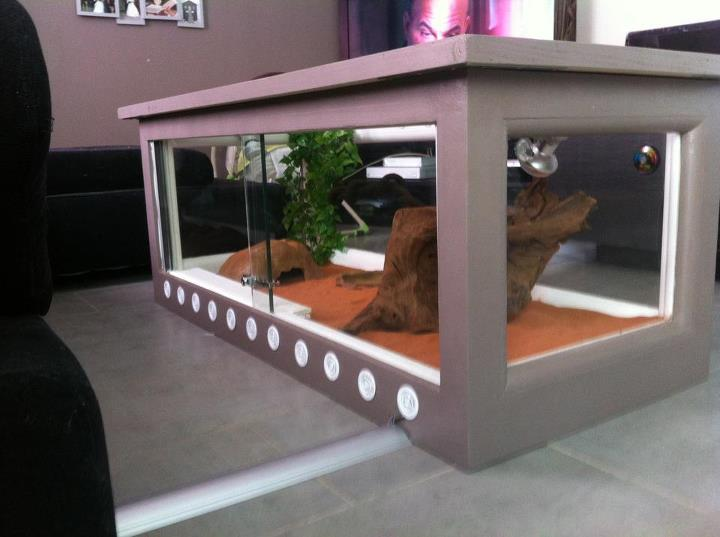exemple table basse terrarium